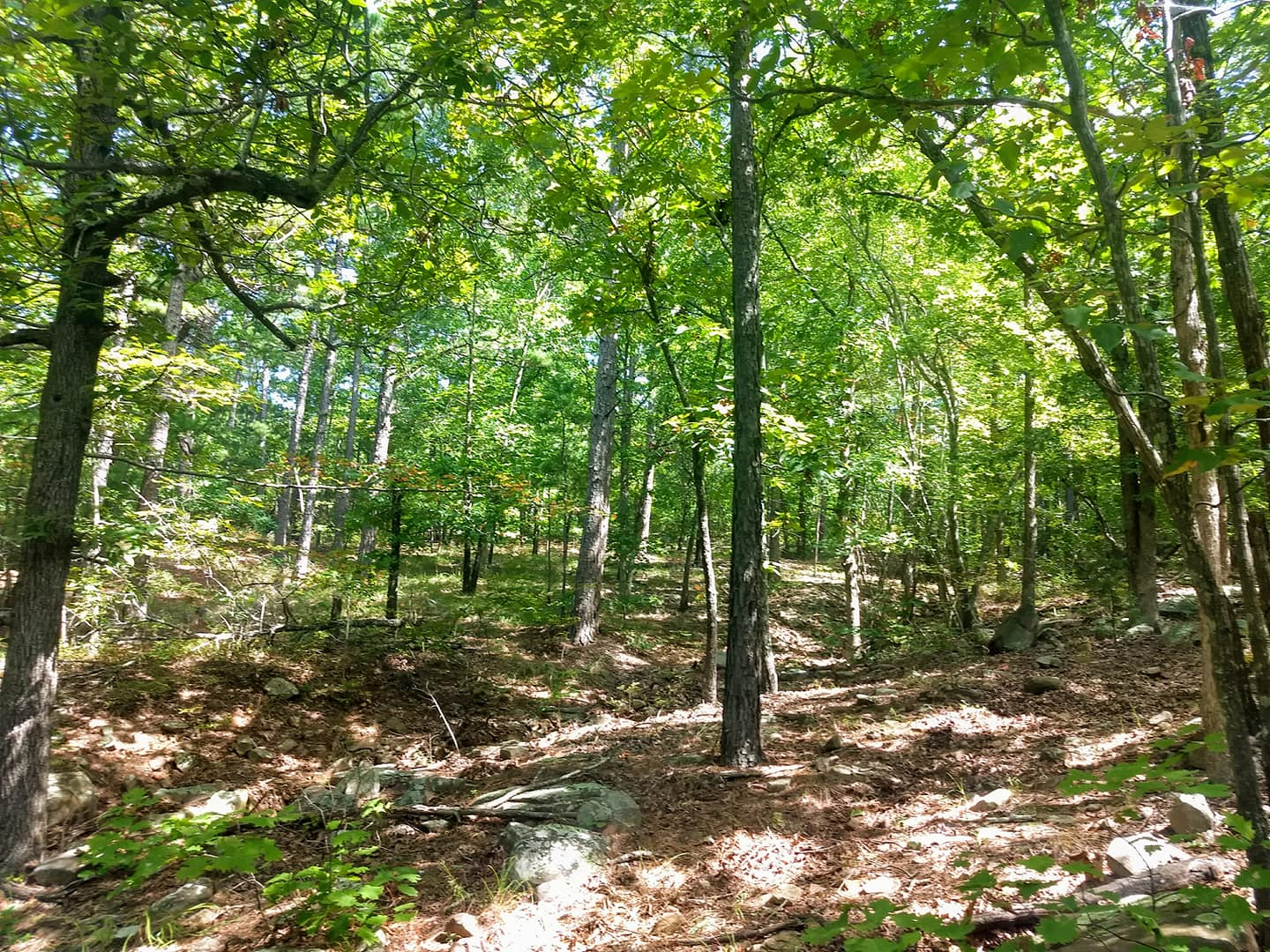 15 Acres Hwy Frontage