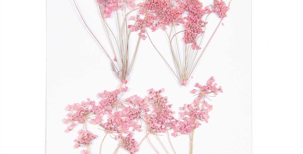 Gepresste Blüten, Ammi-Zweig rosa, 4 Stk