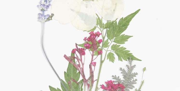 Gepresste Blüten, Mix Set weiß violett