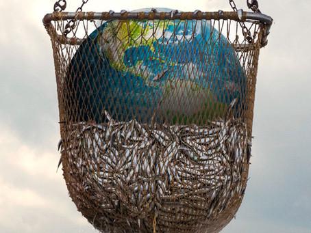 «Eindeutig Propaganda»: Neue Netflix-Doku schockiert mit Bildern und Fakten zum Fischfang