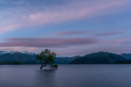 Wanaka Tree Sunset Edit.jpg