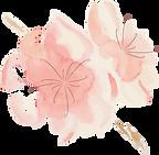 cabinet-sakura-rennes-reiki-yoga-prénata