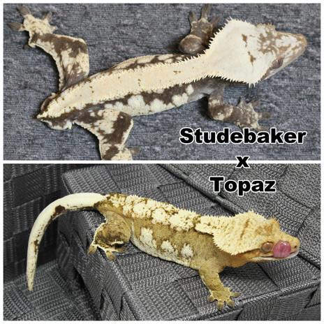 Studebaker x Topaz.jpg