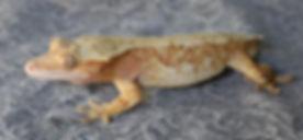 Geckological.jpg