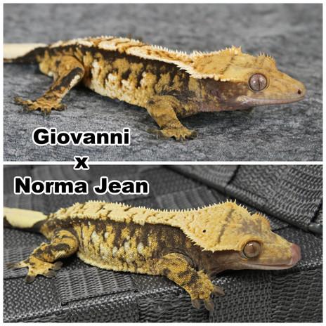 Giovanni x Norma Jean.jpg
