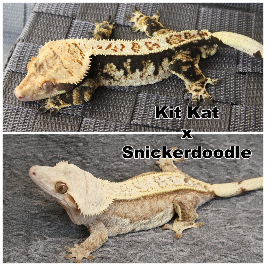 Kit Kat x Snickerdoodle.png