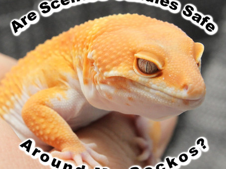 Are scented candles safe around my Reptiles?