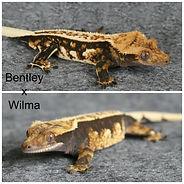 Bentley x Wilma.jpg