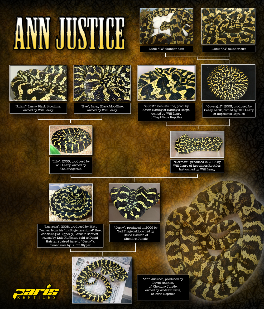 "Lineage chart for ""Ann Justice"""