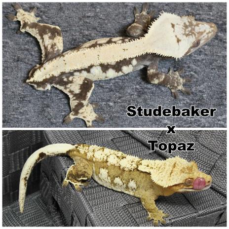 Topaz x Studebaker.png