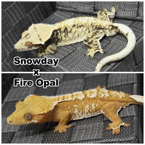 Snowday x Fire Opal.jpg