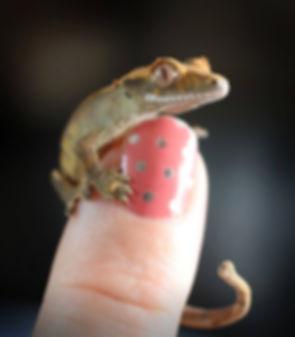 Jamberry Gecko.jpg