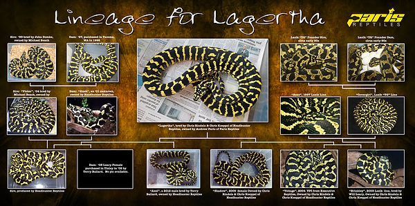 Lagertha_LineageWEBSITE.jpg