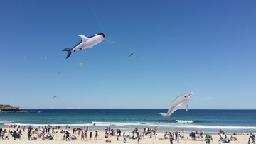 This photo of the fish kites from 2018 by Scott