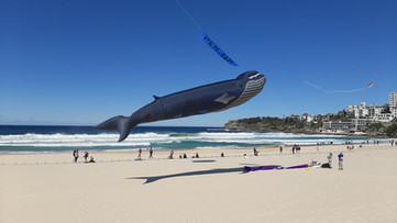 Blue Whale from 2019 by Scott