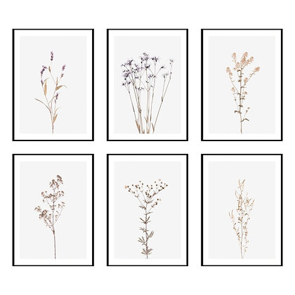 Wildflower Botanical Print - Set of 6 Prints