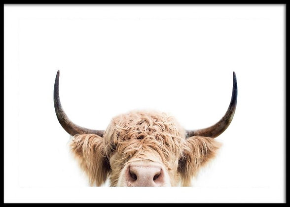 Highland Cow Print No.1 - Cow Poster