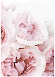 flowers No2 - A2-A6.jpg