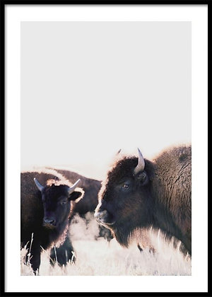 Bison Print No.2 - Buffalo Poster