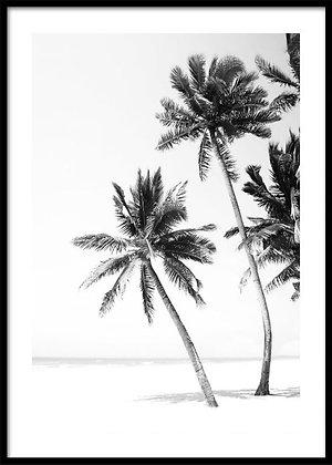 Black & White Palm Trees Print