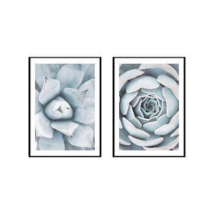 Succulent Print - Set of 2 Prints