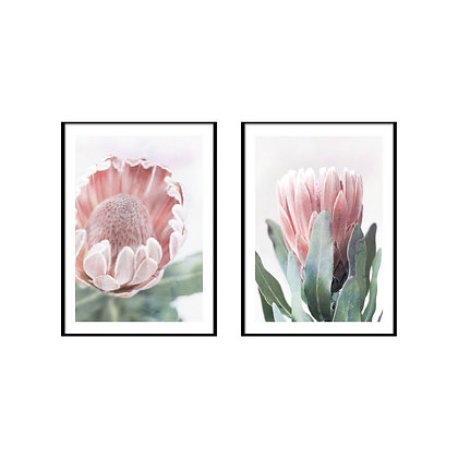King Protea Print - Set of 2 Prints