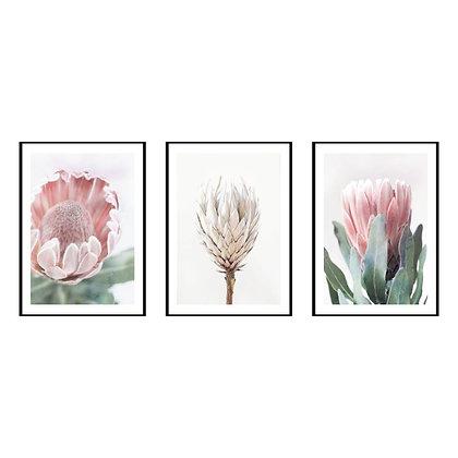 King Protea Print - Set of 3 Prints