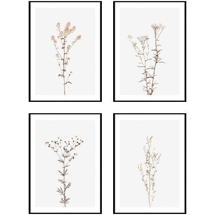 Wildflower Botanical Print - Set of 4 Prints