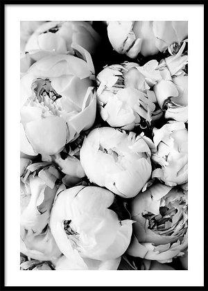 Black & White Peonies Print - Peony Flowers Poster
