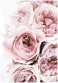 flowers No1 - A1-A6.jpg