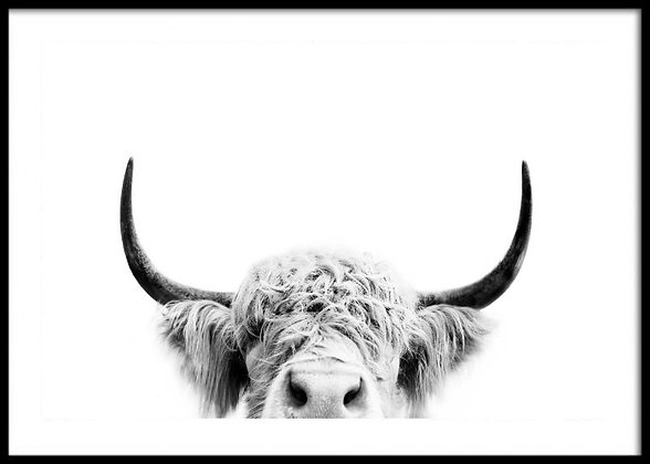 Highland Cow Print No.2 - Cow Poster