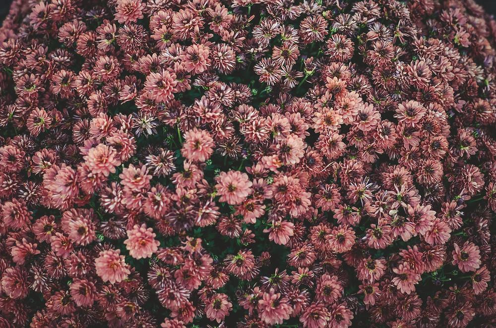 pastel daisies