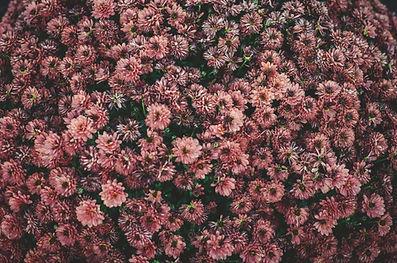 פרחים | אופיר תשובה פסיכותרפיסט