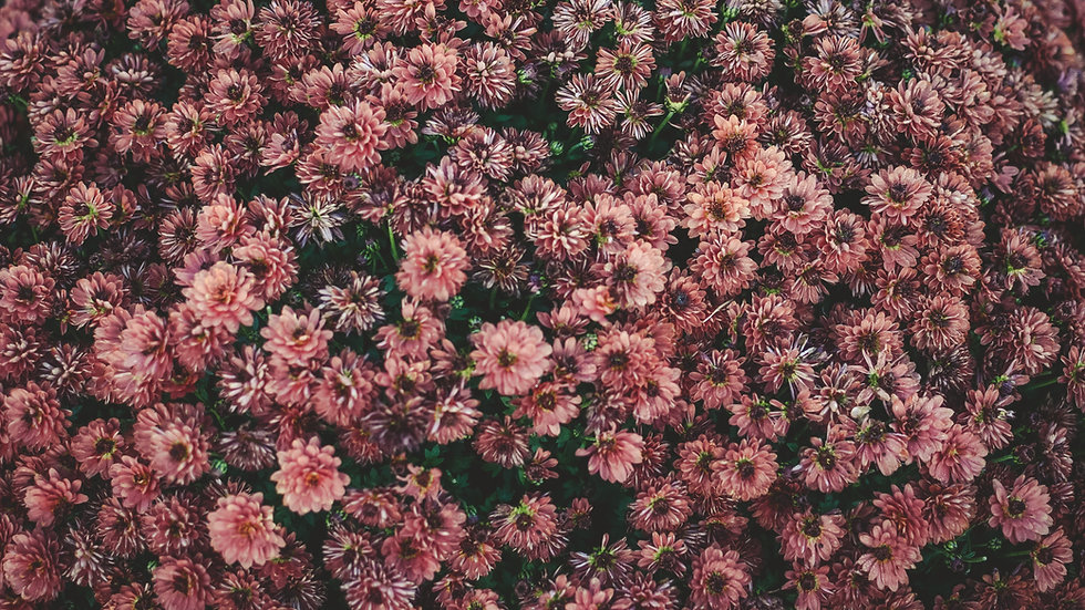 Large bunch flowers