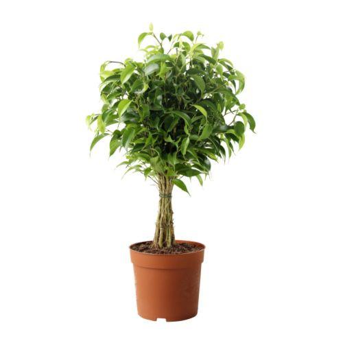 10 Plantas que limpian el aire de tu casa