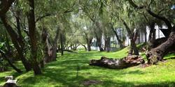 senderos de monteverde (8)