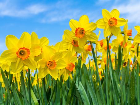 Spring has sprung! 🌼🌷🌸
