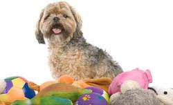 Toys and Stuff Animals