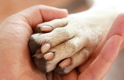 paw-in-hand_68862.jpg