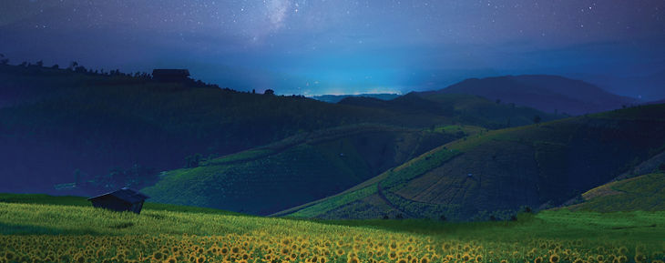 sunflowers-night-larger.jpg