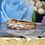 Thumbnail: Casual Band Diamond Ring For Women