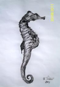 Deniz Atı Etüdü (kamış)