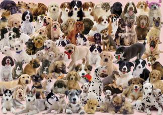 Cosas que no conocías sobre los perros!