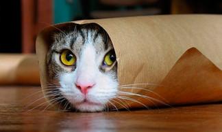 ¿Tu gato está triste? Acá la respuesta!