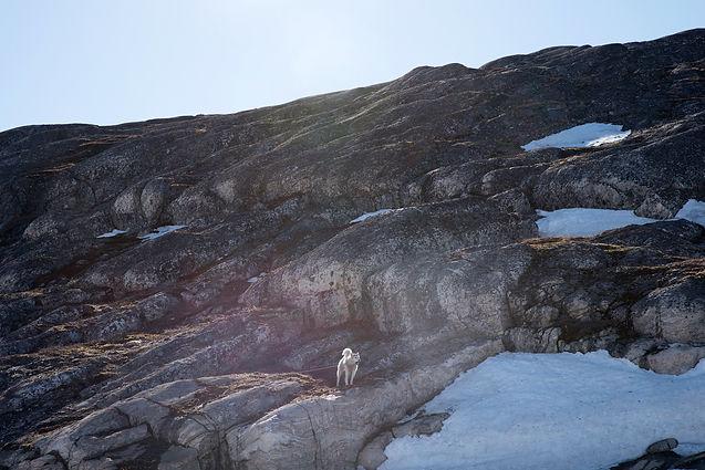 Groenland-04.jpg