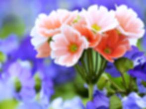 Beautiful-Flowers-4K-Wallpaper-3840x2160_edited.jpg
