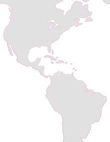 Intimax Internacional: América