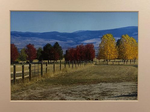 """Trees"" Photograph"