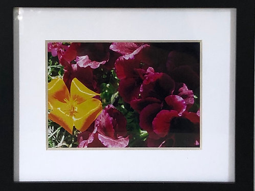 """Amazing California Poppy With Geranium"""