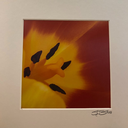 """""""Sunny Side Up"""" Photograph"""